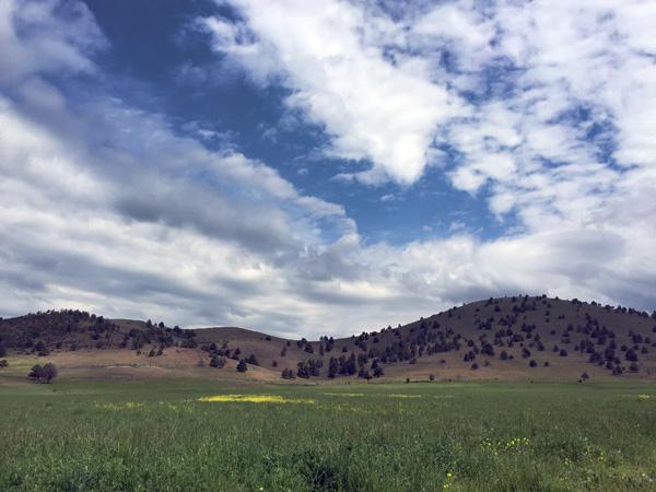 Scott Valley Ranch